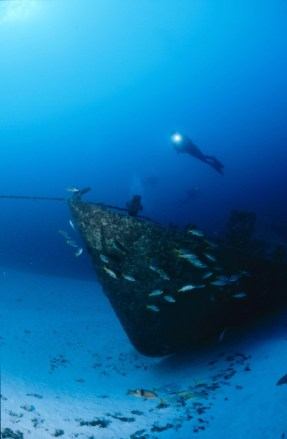 Shortly after the ship was sunk fish already appear - picture Vasco Pinhol