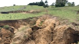 The trees would have prevented this soil erosion