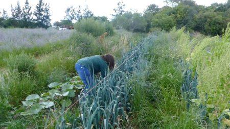 Alda picking fresh vegetables for dinner
