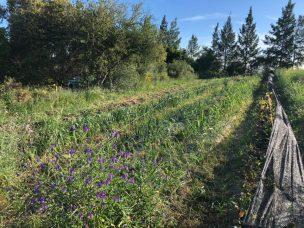 Alda's vegetable garden