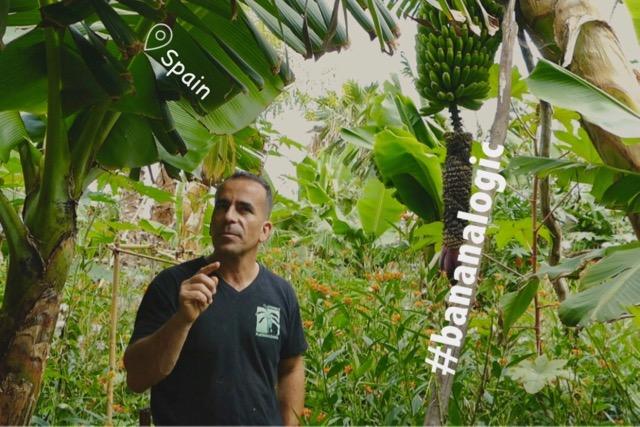 Sustainable Solution 30 - Bananalogic on La Palma