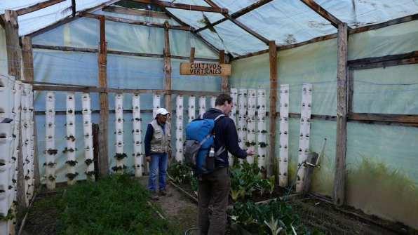 Greenhouse loving veggies and strawberries