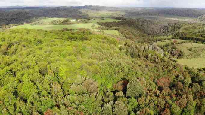 Alihuen's forest from above