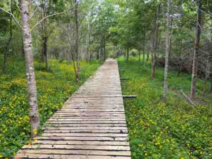 The educational forest trail is all-accessible