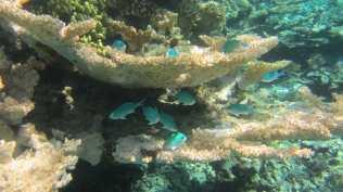 Astonishing underwater world