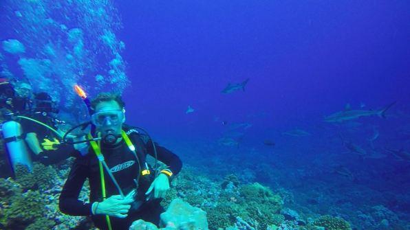 Floris diving with grey reef sharks