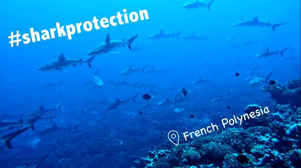 Shark Protection