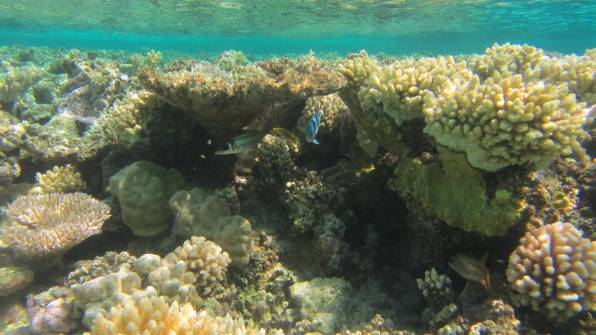 Lots of different coral with fish