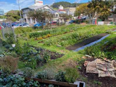 The Kaicycle community garden in Wellington