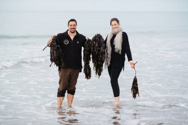 Tane and Clare harvest seaweed - Picture AgriSea