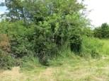 Drywell, deer hideout, wild roses