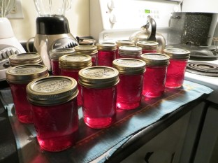 Raspberry Jelly - the girls each made 6 jars