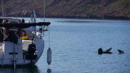 Lobo Bay 4