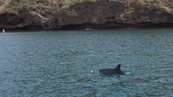 Dolphins in the bay