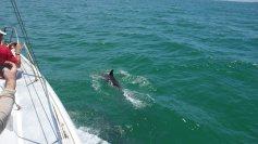 Dolphin Group San Carlos 3