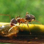 Ilmu Kimia di Balik Komunikasi Semut