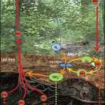 Sifat, Kegunaan, Pembuatan dan Sumber dari Unsur Molibdenum