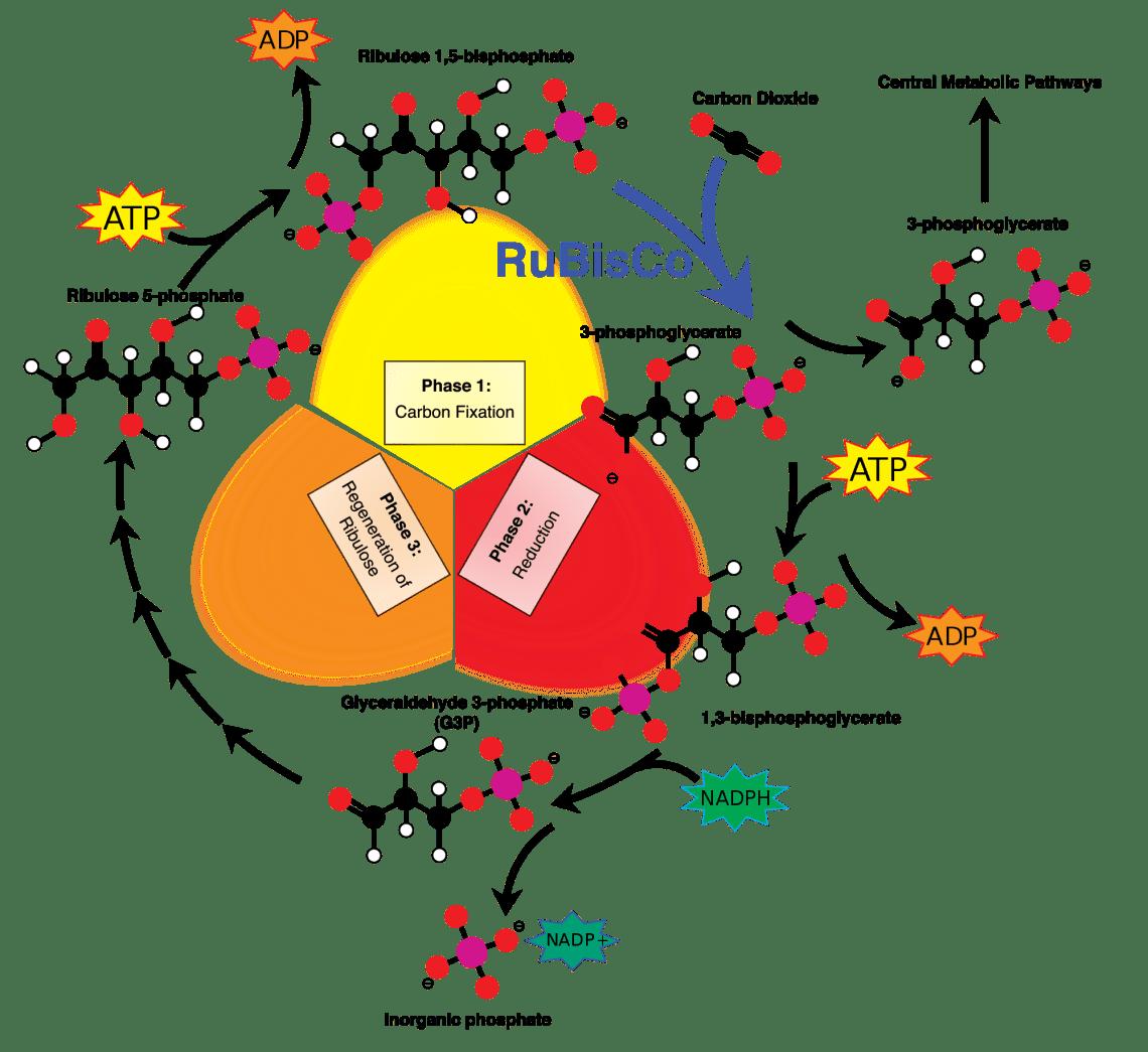 Ilmu Kimia Dalam Fotosintesis