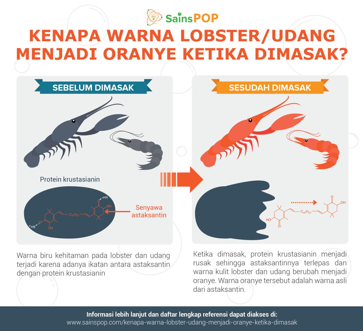 Kenapa Warna Lobster/Udang Menjadi Oranye Ketika Dimasak