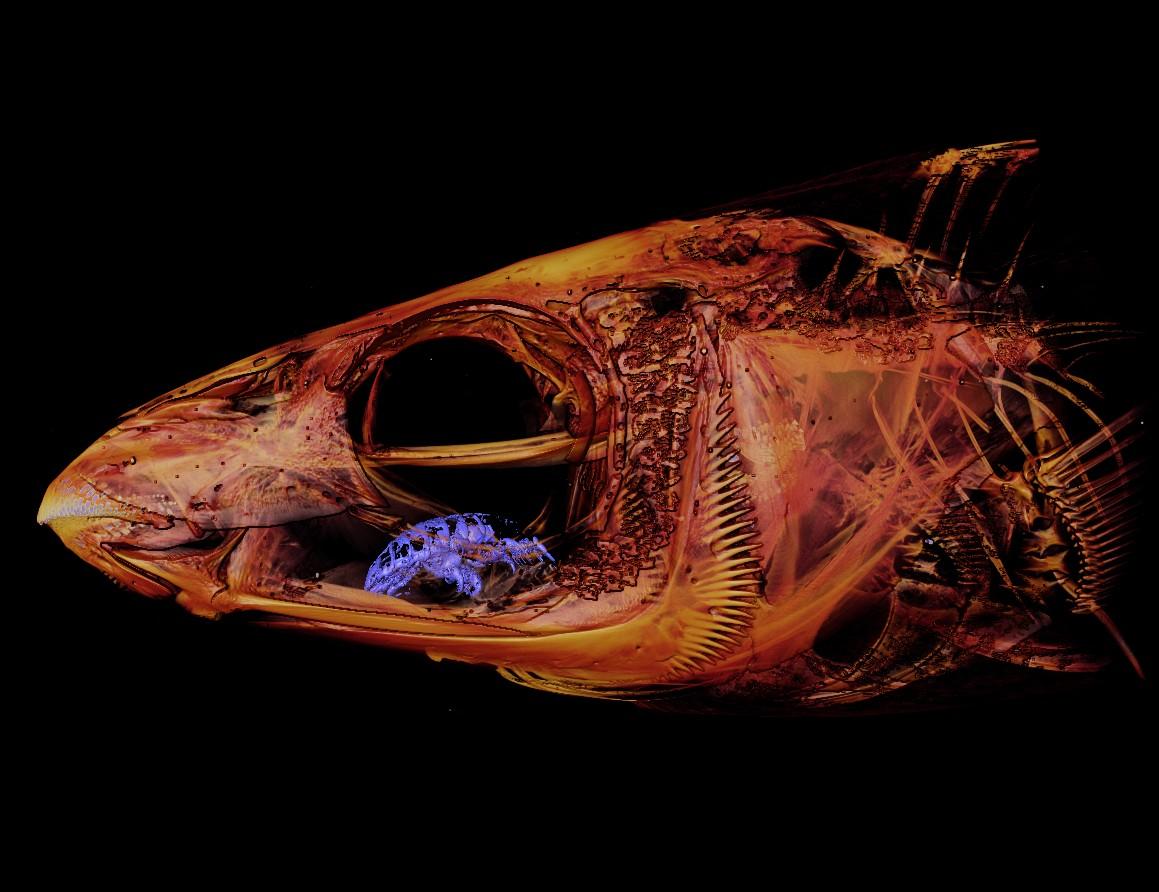 Kutu Pemakan Lidah Ikan