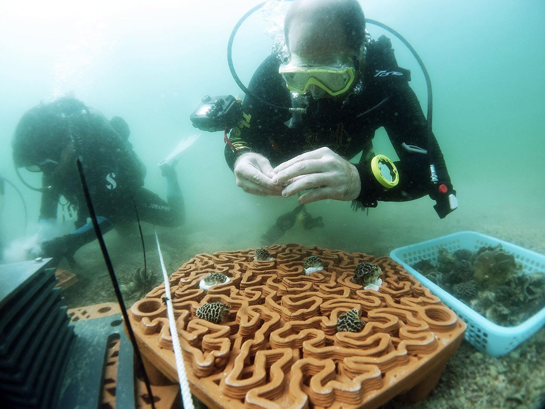 Pemasangan terumbu karang buatan