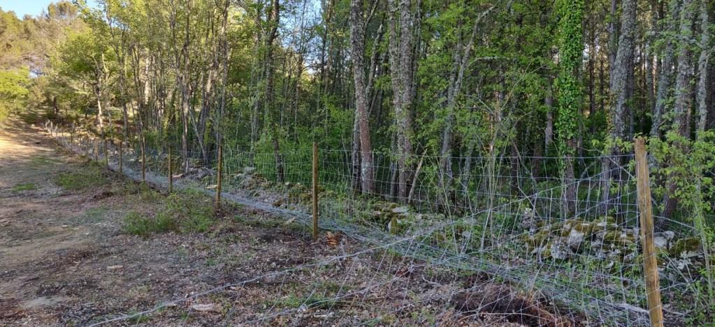 Les chênes du Domaine Saint-Antonin véhiculeraient le pourridié.