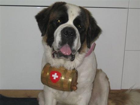 Saint Bernard With Swiss Cross Pink Collar Barrel 460345