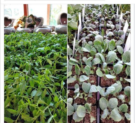 Gamm Vert photos plants