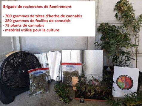 Cannabis_Gendarmerie (1)