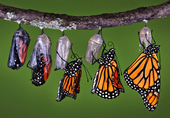 Image result for butterfly cocoon photo