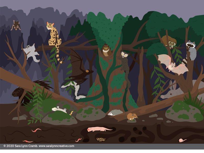Persebaran Flora Dan Fauna Di Indonesia Lengkap Peta