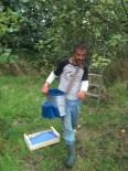 Joseph - cueillette des pommes