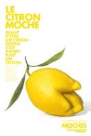 legumes_moches_04