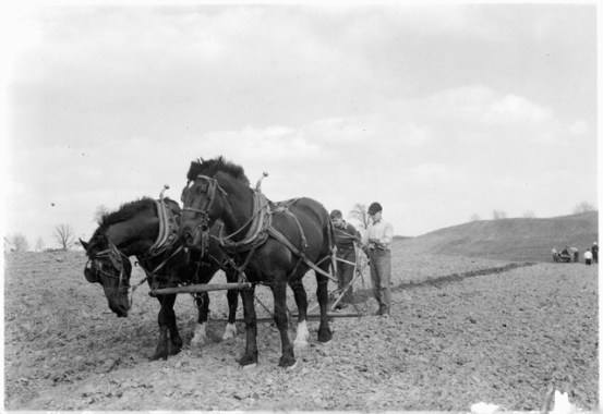 In 1942, residents of Boys Totem Town worked in the nearby fields. Photo courtesy MnHS.