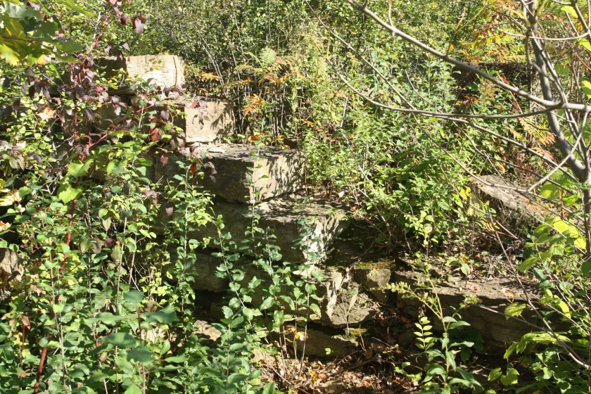 Part of a wall or steps stand amongst the weeds and bushes.