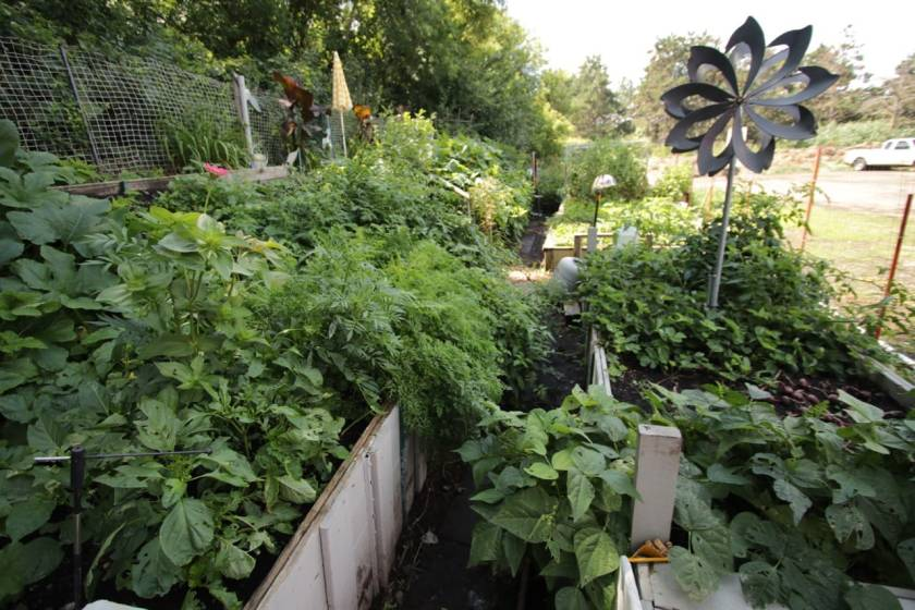 Jeff's healthy and productive waste site garden.