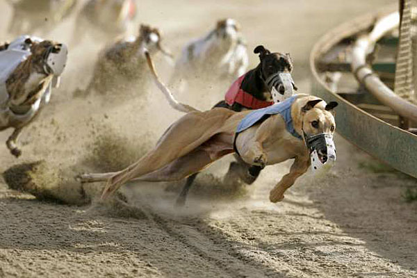 Cross Lanes Dog Track