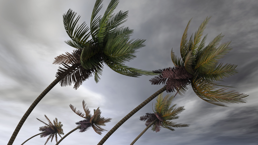 storm weather palms
