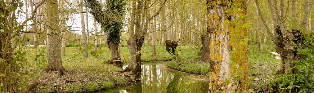 Rivière Saint Valérien en Vendée