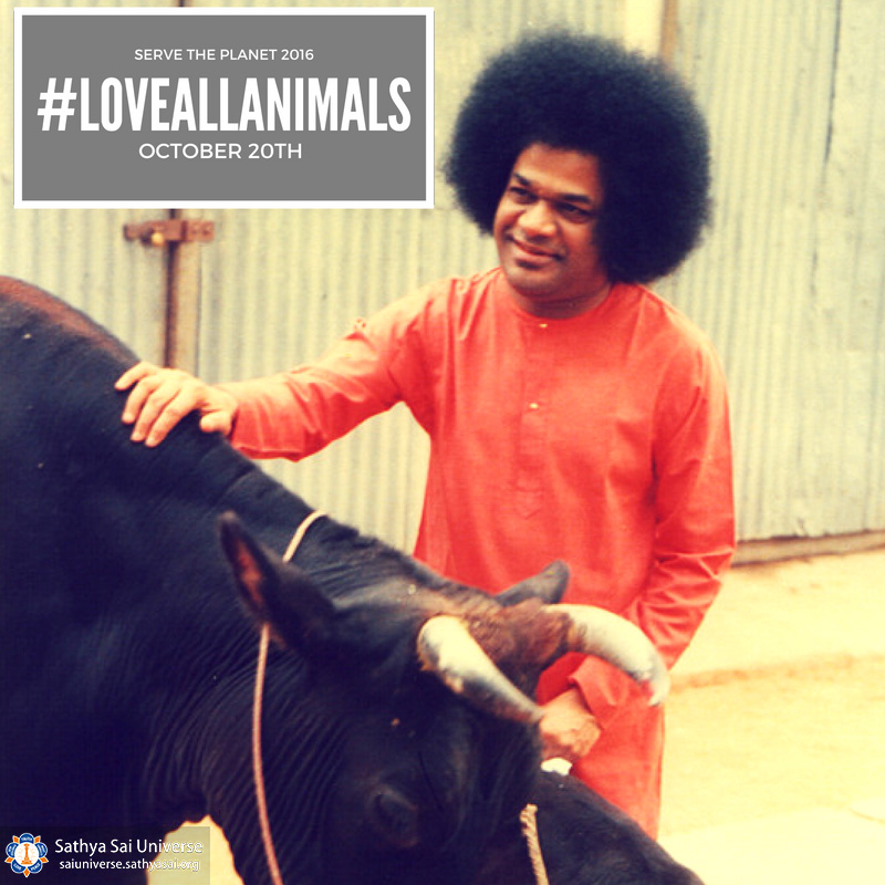 love-for-animals-project-canad-2017