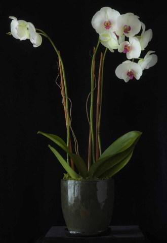 braiden_blossoms-Flowers_2_2 Jul 2012