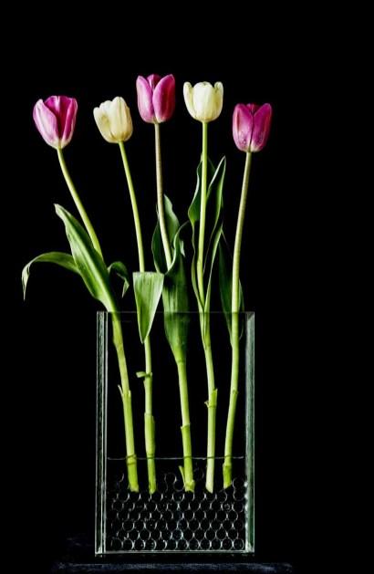 braiden_blossoms-Tulips_2013