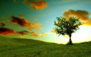 Lonely-Tree-Photography-Wallpapers-02