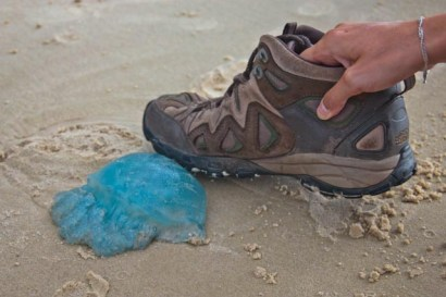 Sympa la couleur des méduses!