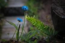 untitled shoot-7068
