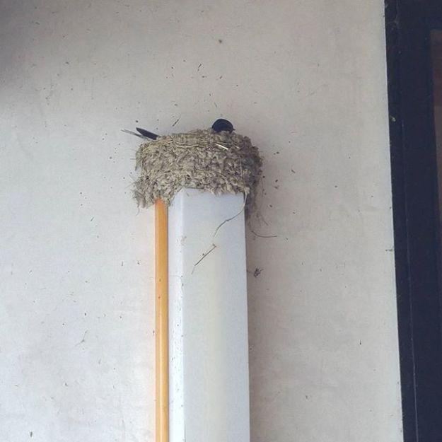 【Instagram】通路に新居を構えた新婚さん、ただいま卵をあたため中。営業中は巣の土台になっている照明がつくので、ちょっとしたお節介大家気分です(笑)