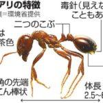 名古屋港飛島ふ頭で発見猛毒ヒアリの弱点とは調査研究で結果が!刺された時の症状についても!