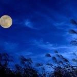 中秋の名月2021(十五夜)の方角や時間帯は何時頃にピークを迎える?