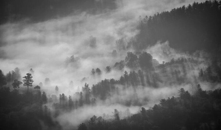 лес,черно-белая
