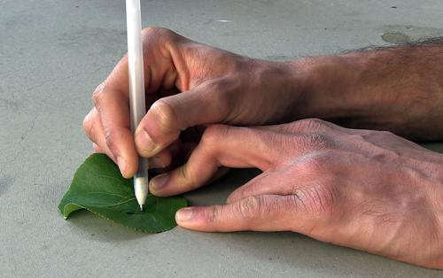 joe wang pens writing on leaf crop